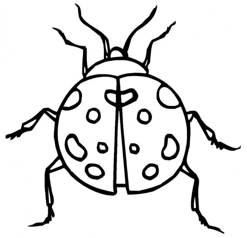 Coloring Pages Lady Bugs For Adults