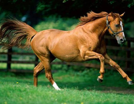 <b>Wallpapers</b> de <b>caballos</b>
