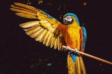 5 viajes sorpresa ideales para amantes de los animales