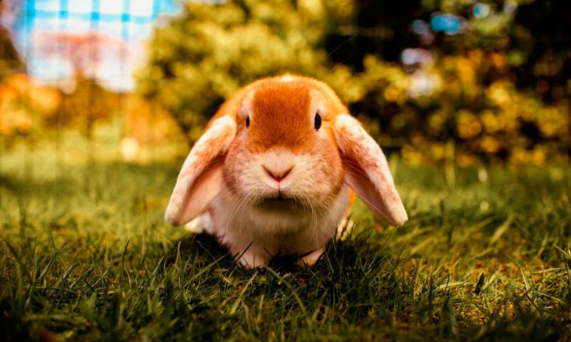 7 ideas para hacer juguetes caseros para conejos