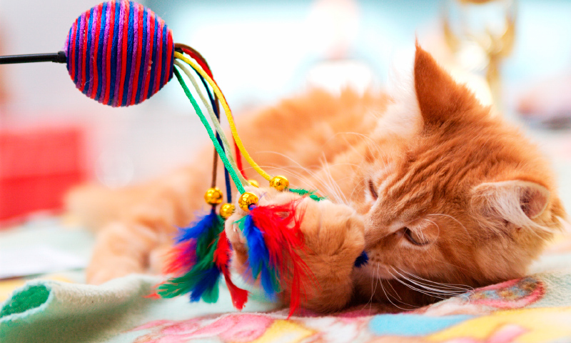 Accesorios para gatos