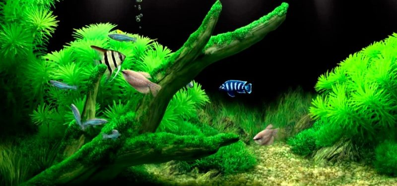 Acuarios para peces agua salada dulce c lida fr a for Todo para acuarios