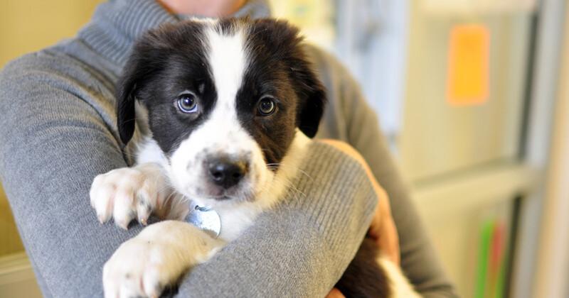 Adopción de animales: por qué no debes comprarlos