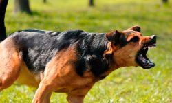 Agresividad canina
