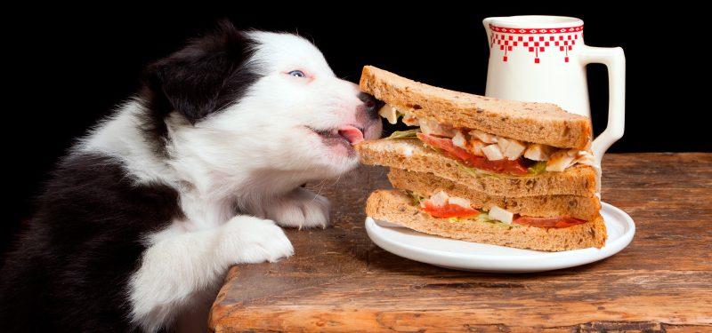 Alimentación de cachorros