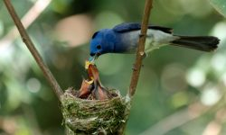 Alimentación de los pájaros