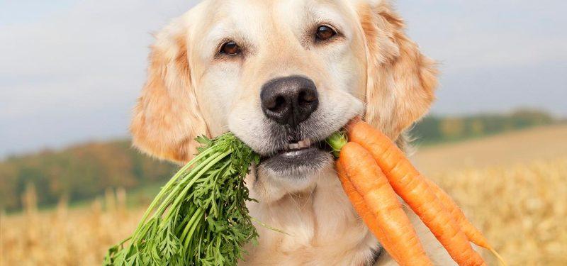 Alimentación de perros