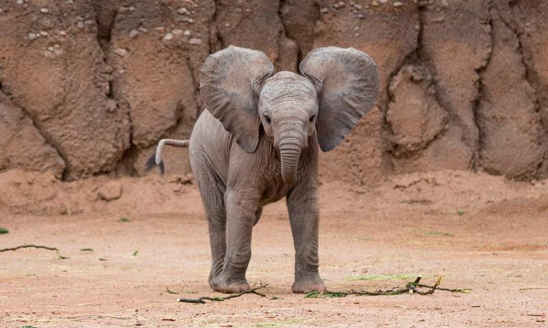 Bebés elefantes