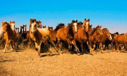 Caballo Mustang