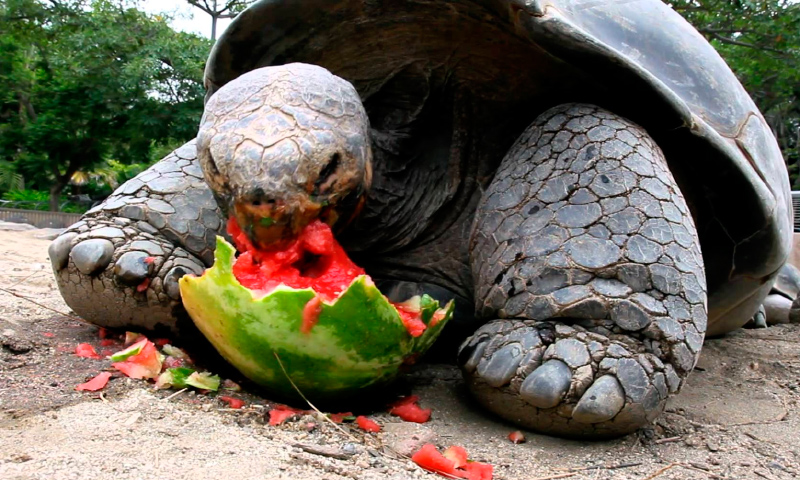 Características de las tortugas Galápagos