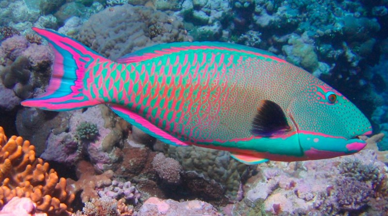peces anipedia