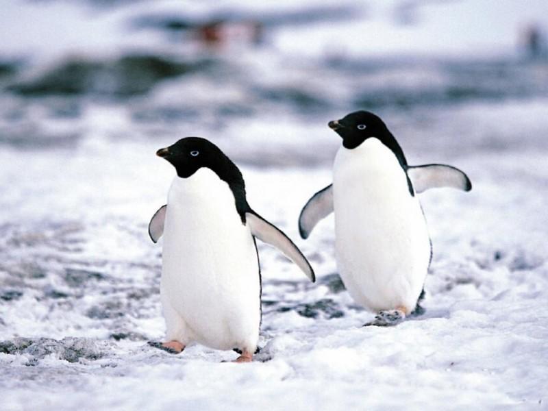 Los Pinguinos Del Norte Music Of La Raza Vol 1