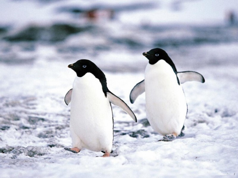 Pingüinos desactivadores de bombas