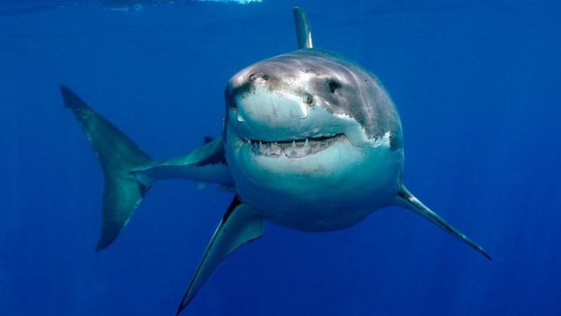 FORO ESCUELA BOLSA Caracteristicas-generales-de-los-tiburones