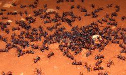 Colonias de hormigas