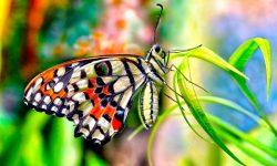 Colores de las mariposas