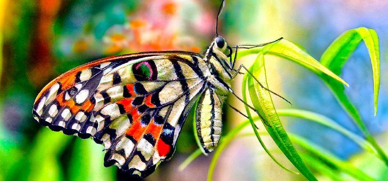 Imagenes De Mariposas De Colores: Tipos De Coloración Para Su