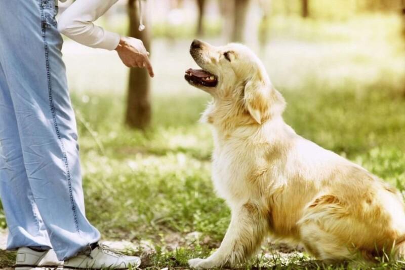 Cómo adiestrar a un perro: claves y consejos de especialistas