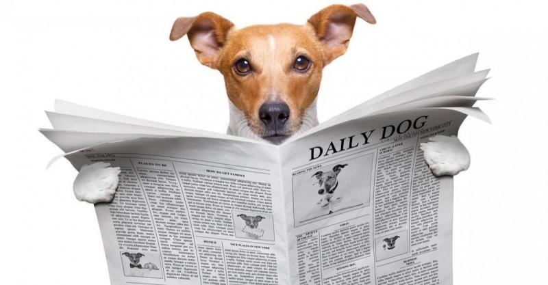 Cómo adiestrar un perro: trucos y consejos prácticos