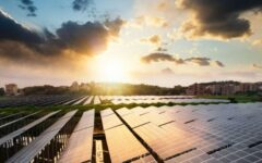 Cómo ayuda la energía solar a preservar el mundo animal