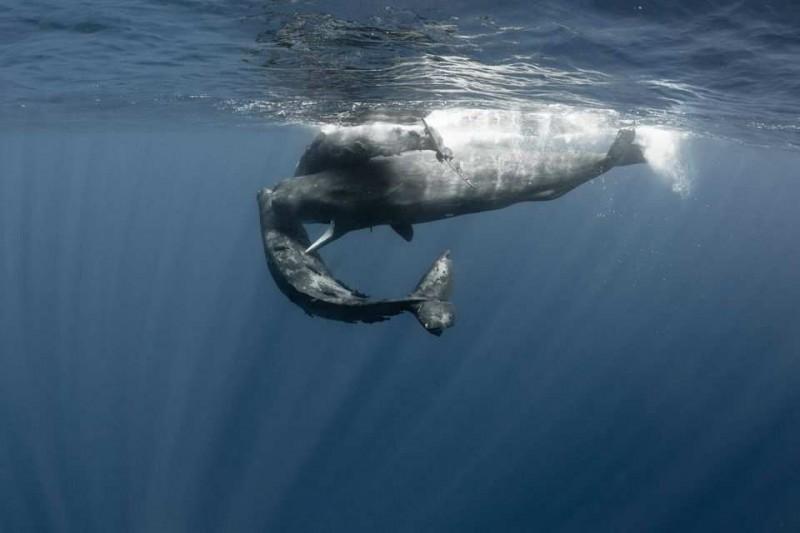 ¿Cómo cantan las ballenas?