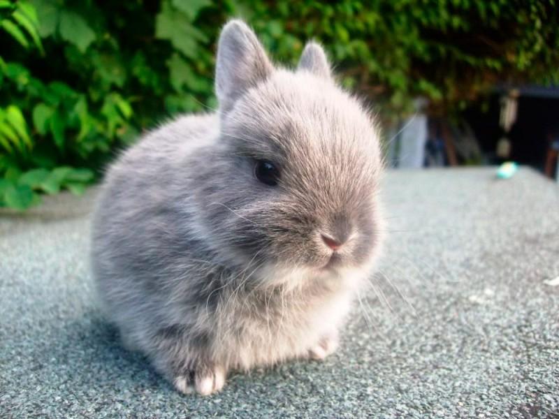 Cómo cuidar a un conejo toy