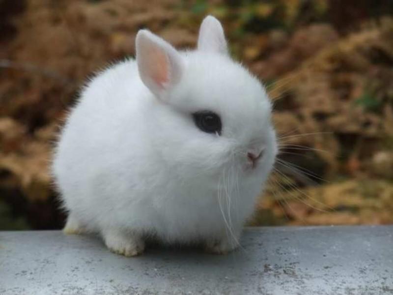 Cómo domesticar a un conejo