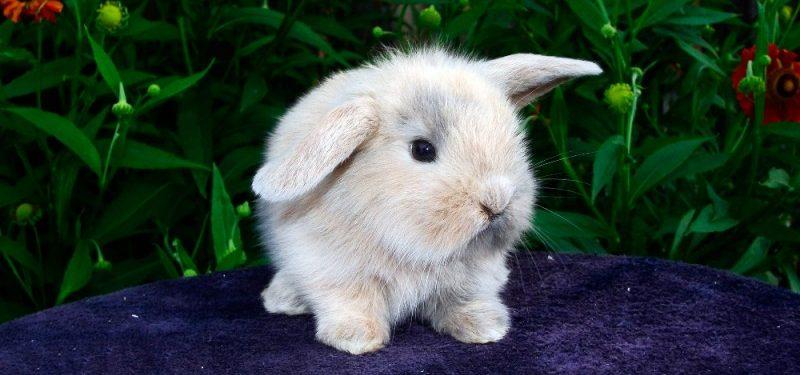 Cómo saber si un conejo es macho o hembra. Diferencias entre sexos