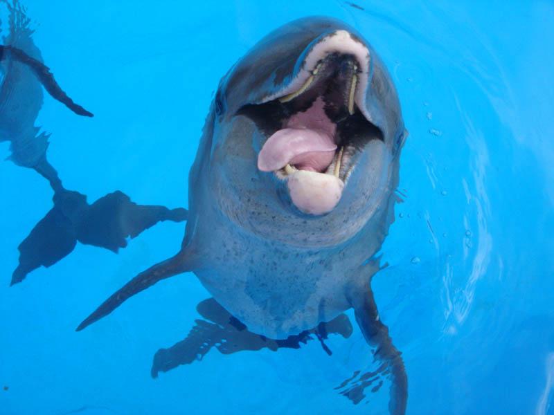 Cómo se comportan los delfines
