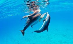 Comportamiento delfines