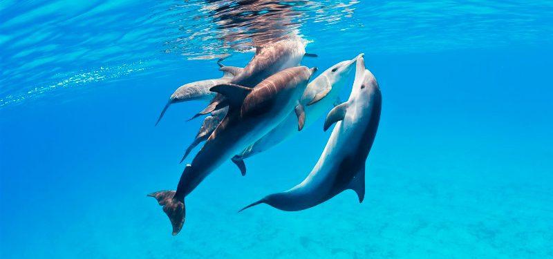 comportamiento-delfines