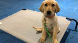 Conceptos básicos que debes saber para educar a tu perro