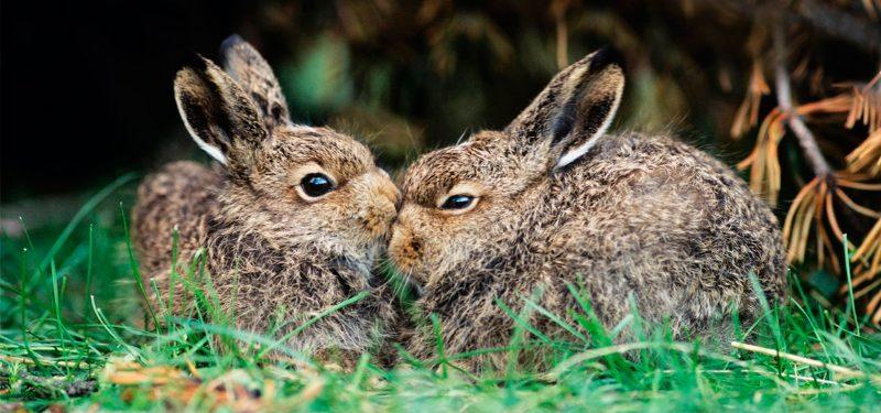 Fotos de conejos de razas 2