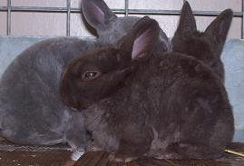 Las mejores FOTOS DE CONEJOS  Imgenes de conejos