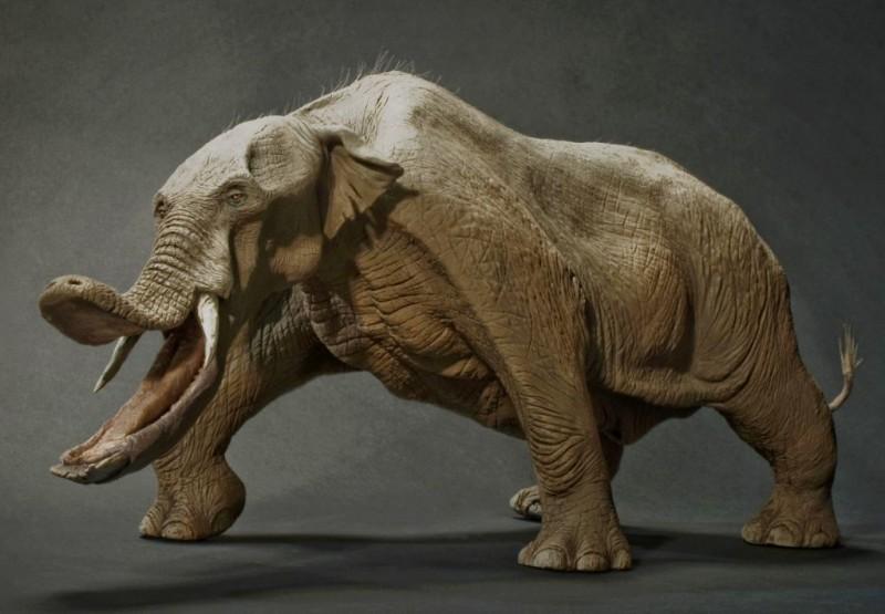 Conoces la evoluci n de los elefantes las especies - Como se aparean los elefantes ...