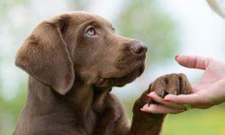 Cuáles son los beneficios de la comida deshidratada en perros