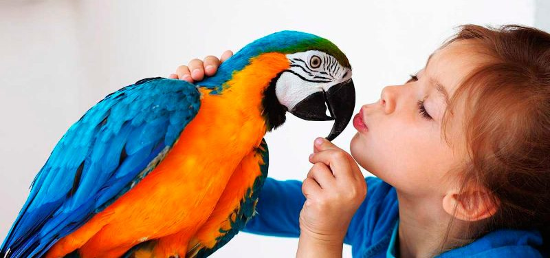 Cuidados de los pájaros