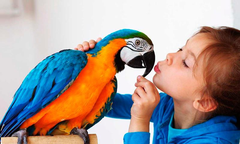Cuidados de los Pájaros (GUÍA COMPLETA)