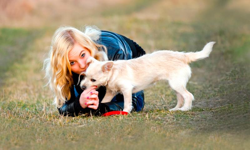 Cuidados de cachorros
