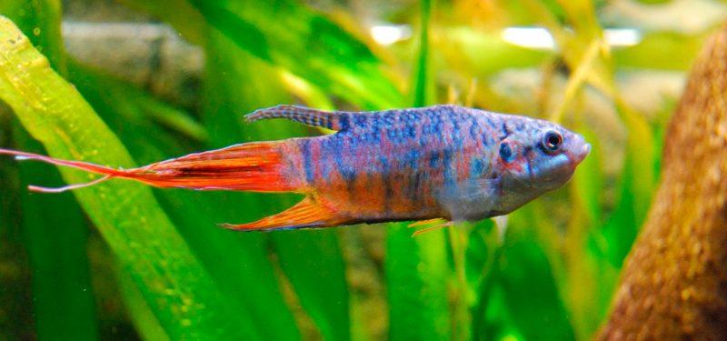 Cuidados de los peces gu a completa for Cuidado de peces
