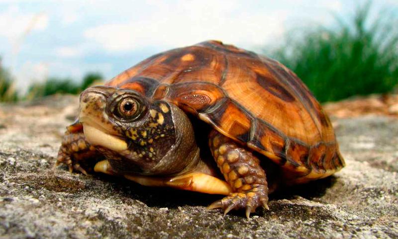 Cuidados tortugas terrestres