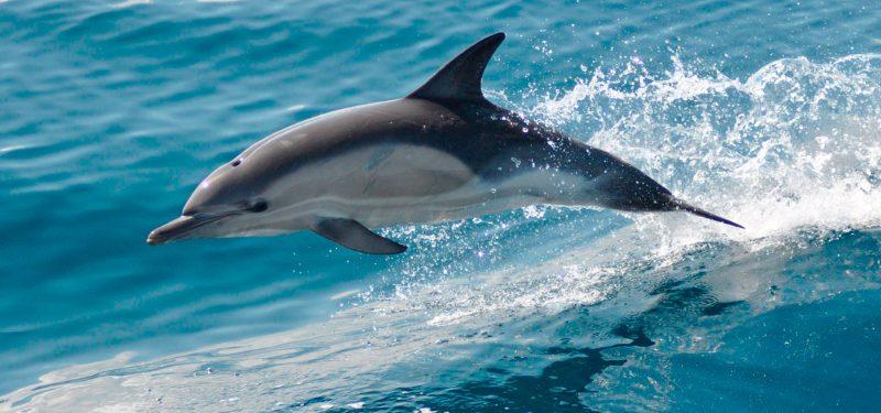 Resultado de imagen de delfines