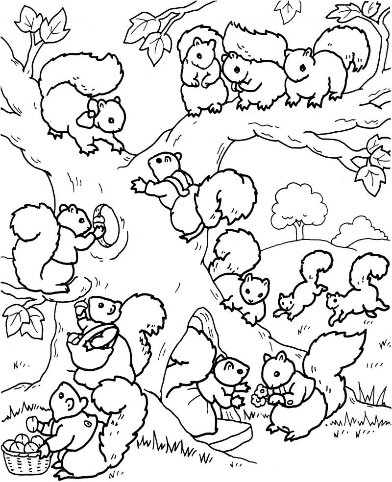 Dibujos de ARDILLAS (Para Colorear y Pintar)