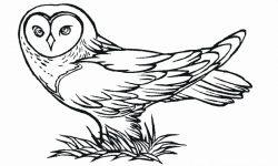 Dibujos de búhos