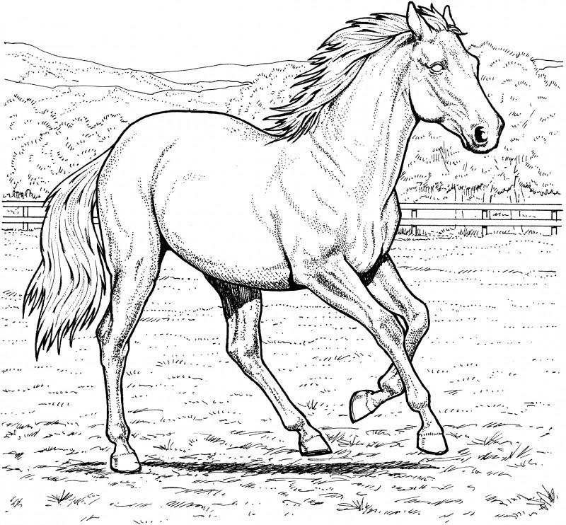 Worksheet. Dibujos de CABALLOS Para Colorear y Pintar