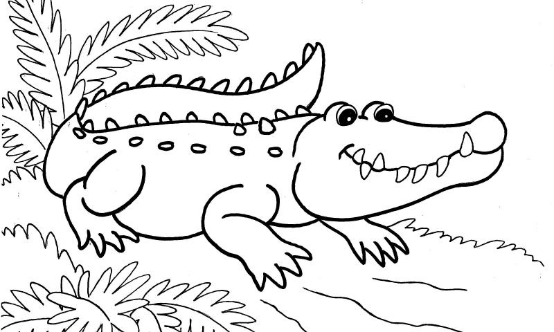 Dibujos de COCODRILOS (Para Colorear y Pintar)