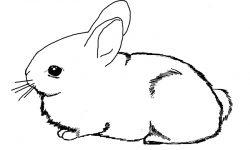 Dibujos de conejos