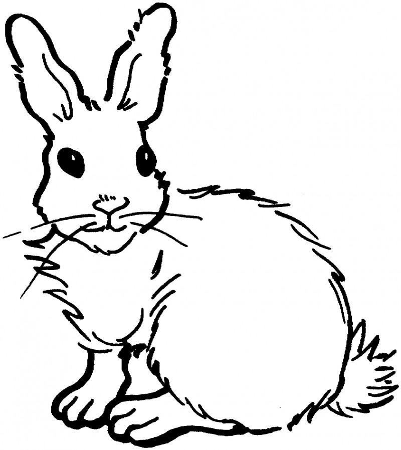 Dibujos De Conejos Para Colorear Y Pintar