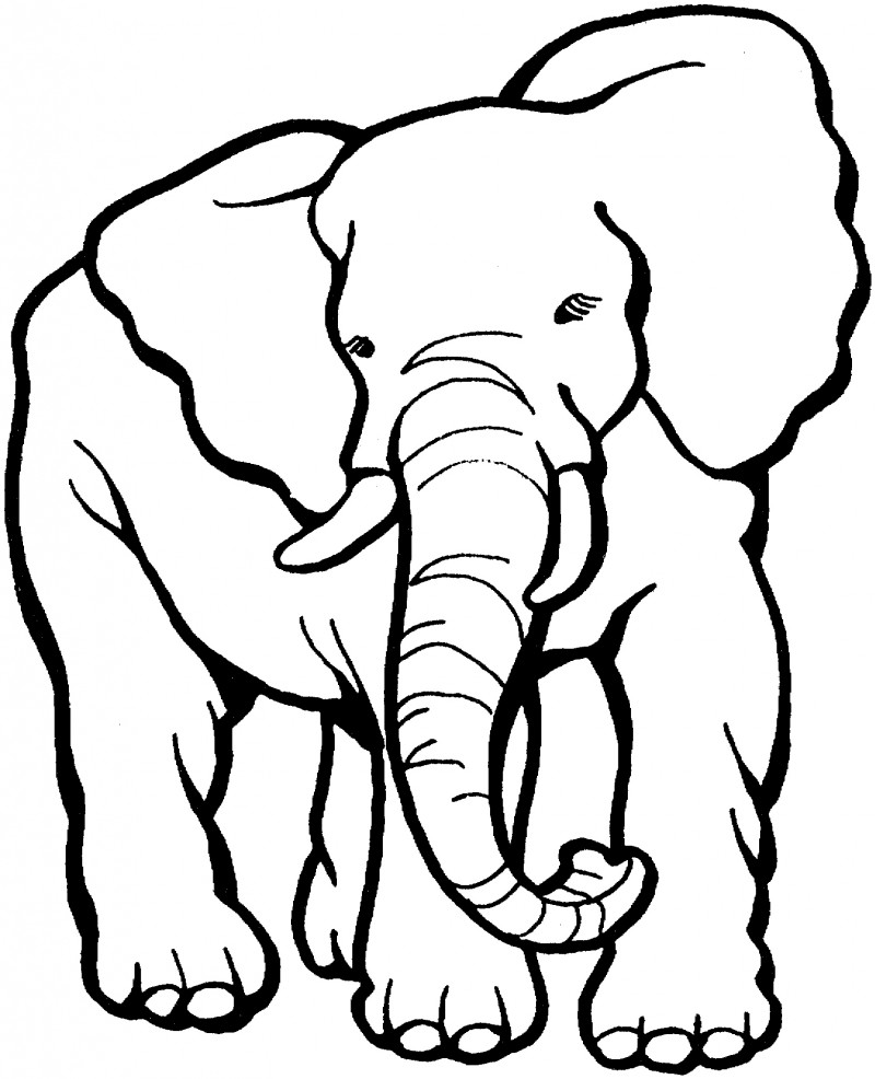Dibujos de ELEFANTES (Para Colorear y Pintar)