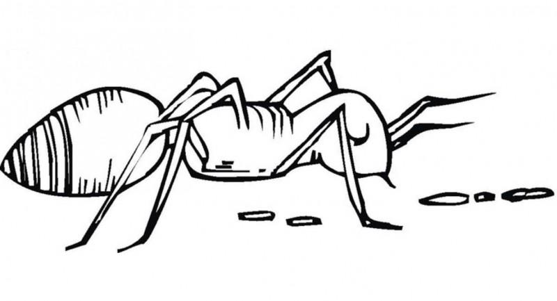 Dibujos De Hormigas Para Colorear Y Pintar